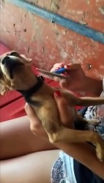 【犬猫動物動画まとめ】Dramatic Dog Makes Crazy Noise While Being Combed