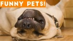 【犬猫動物動画まとめ】Funniest Pets & Animals of the Week Compilation June 2018 _ Hilarious Try Not to Laugh Animals Fail