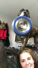 【犬猫動物動画まとめ】Hungry Dog Dramatically Delivers Food Bowl
