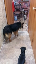 【犬猫動物動画まとめ】Kitty Drags Dog Into Kitchen