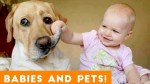 【犬猫動物動画まとめ】Most Adorable Animal and Baby Compilation 2018 _ Funny Pet Videos