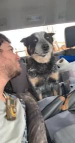 【犬猫動物動画まとめ】Dog Changes Expression as Owner Looks in Their Direction