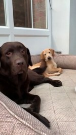 【犬猫動物動画まとめ】Dog's Happy Tail Cleans Puppy's Face