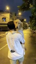 【犬猫動物動画まとめ】Dog is Happy to Be Carried Down the Street