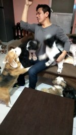 【犬猫動物動画まとめ】Dogs Super Excited to See Their Furdad