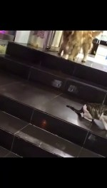 【犬猫動物動画まとめ】Golden dog comes to the rescue in time so that these two kittens do not fight incredible, Viral Video
