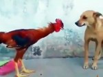 【犬猫動物動画まとめ】Funny As The Chicken Wrestle With The Dog