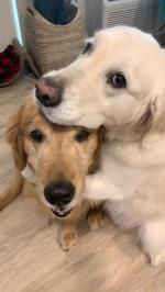 【犬猫動物動画まとめ】Owner Asks Dog Questions About Who Is a Good Boy And Whom Will They Cuddle