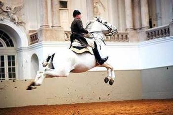 spain_horseridingshcool1