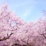 桃の節句の起源
