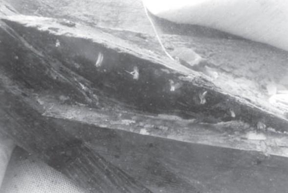水中考古学 イスラエル 7