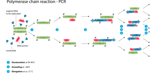 Contamination - PCR schematic