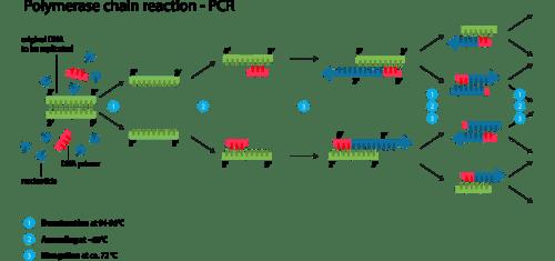 Contamination - PCR schematic