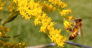 Honey Dubbel