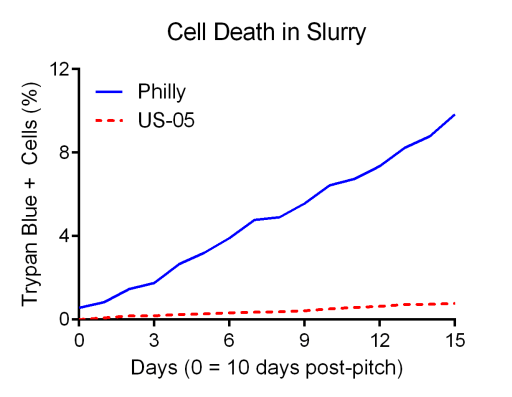 Philly sour dies at about 1% of cells/day after fermentation is compelte.