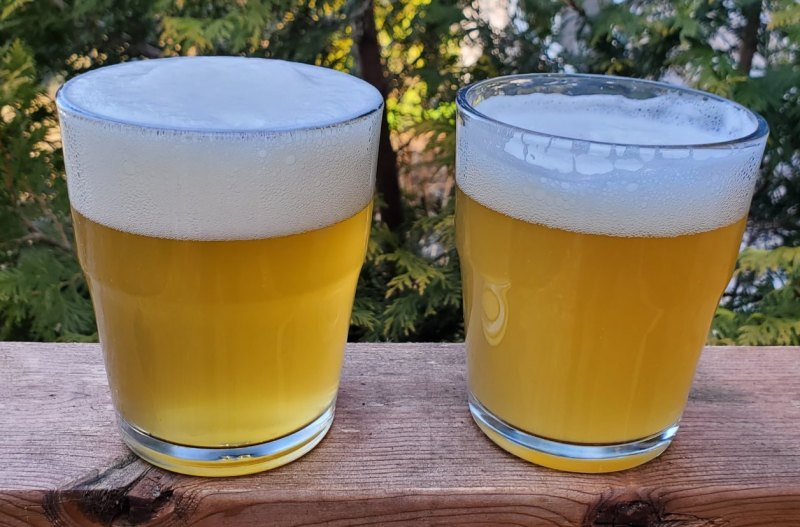 photo of two IPAs fermented with lactic yeast,