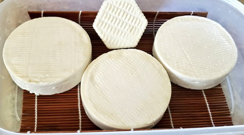 camembert cheese in an aging container