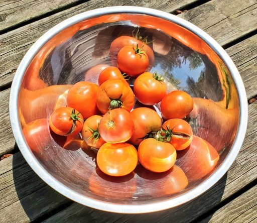 Bowl of tomatoes  that areready to become Fermented Foods!