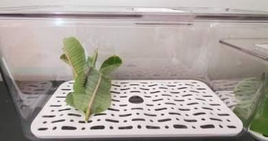 monarch butterfly terrarium