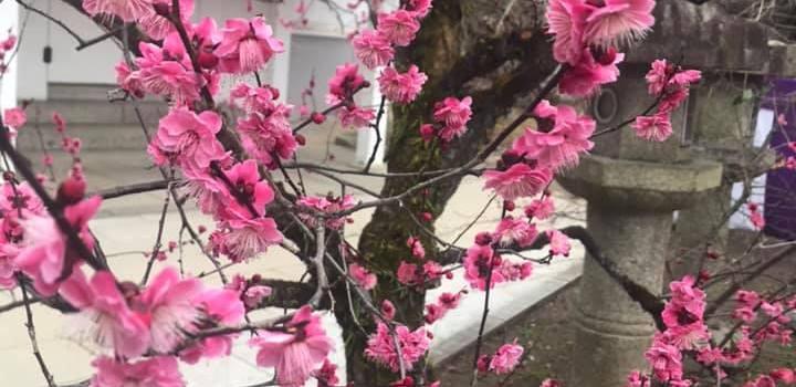 シュタイナー「食の勉強会」3月_2019-03-19