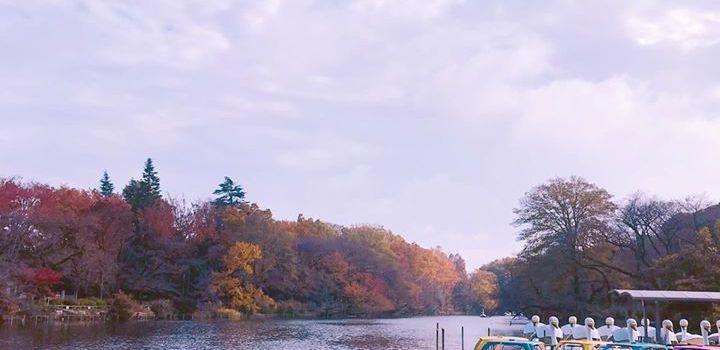 #紅葉 の #井の頭公園