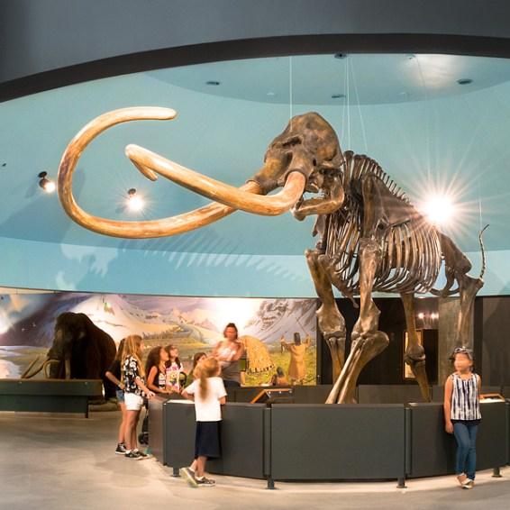 Mastodon display