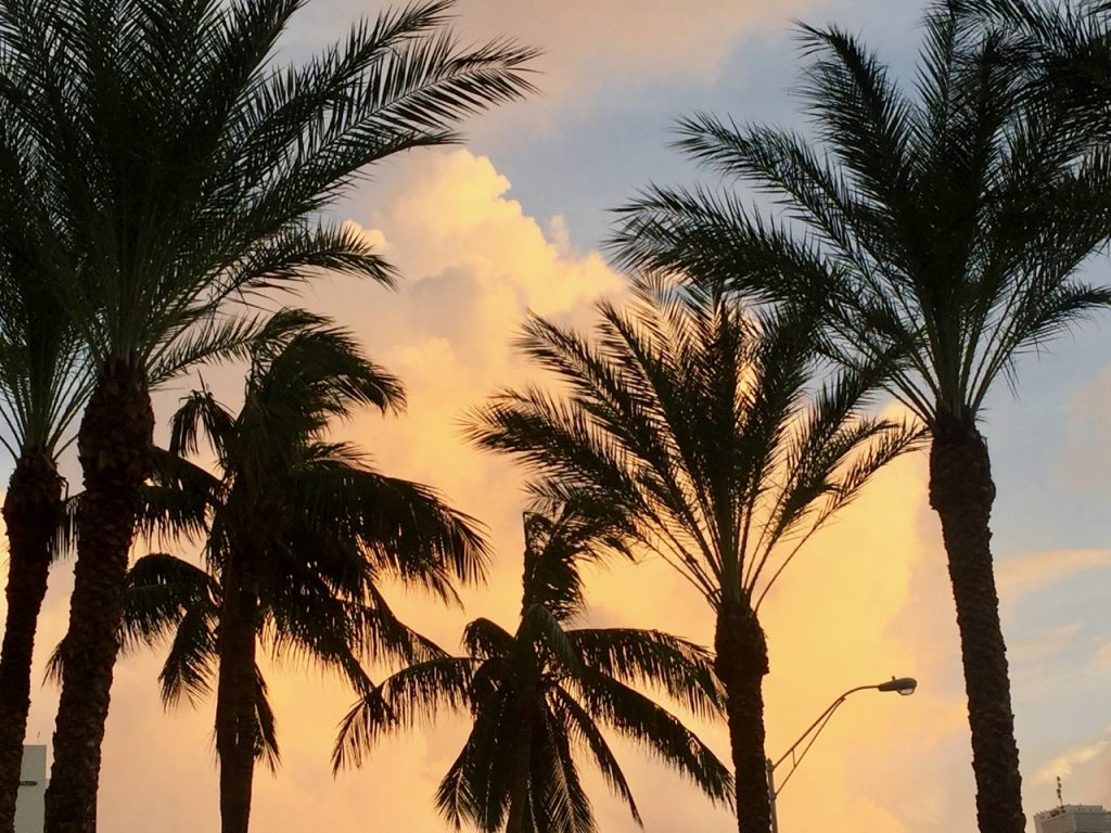 Sunset through the palm trees at Miami Beach