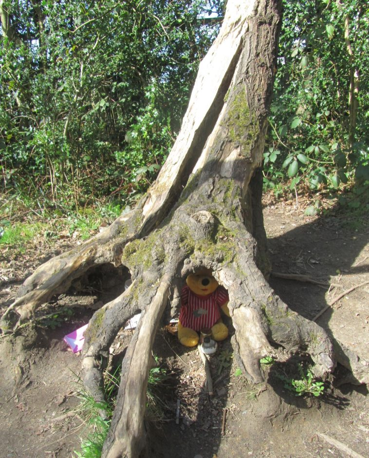 How to find Winnie-the-Pooh in the Ashdown Forest