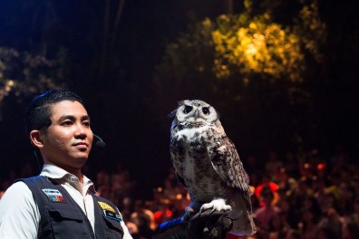 Suitcase Six owl Top Unexpected Travel Careers: Jobs That Allow You to Travel That Aren't in the Travel Industry
