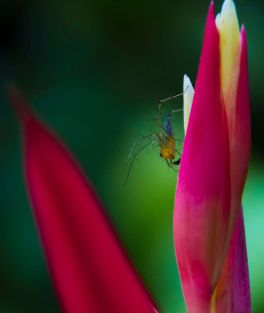 Suitcase Six SPIDER-BUG-865x1024 3 Days in Kuala Lampur: My Malaysia Itinerary