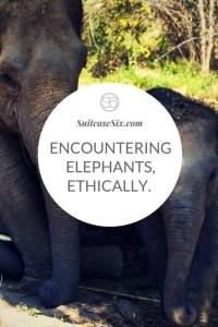 Suitcase Six encountering-elephants-pin-3-200x300 Encountering Elephants Ethically.