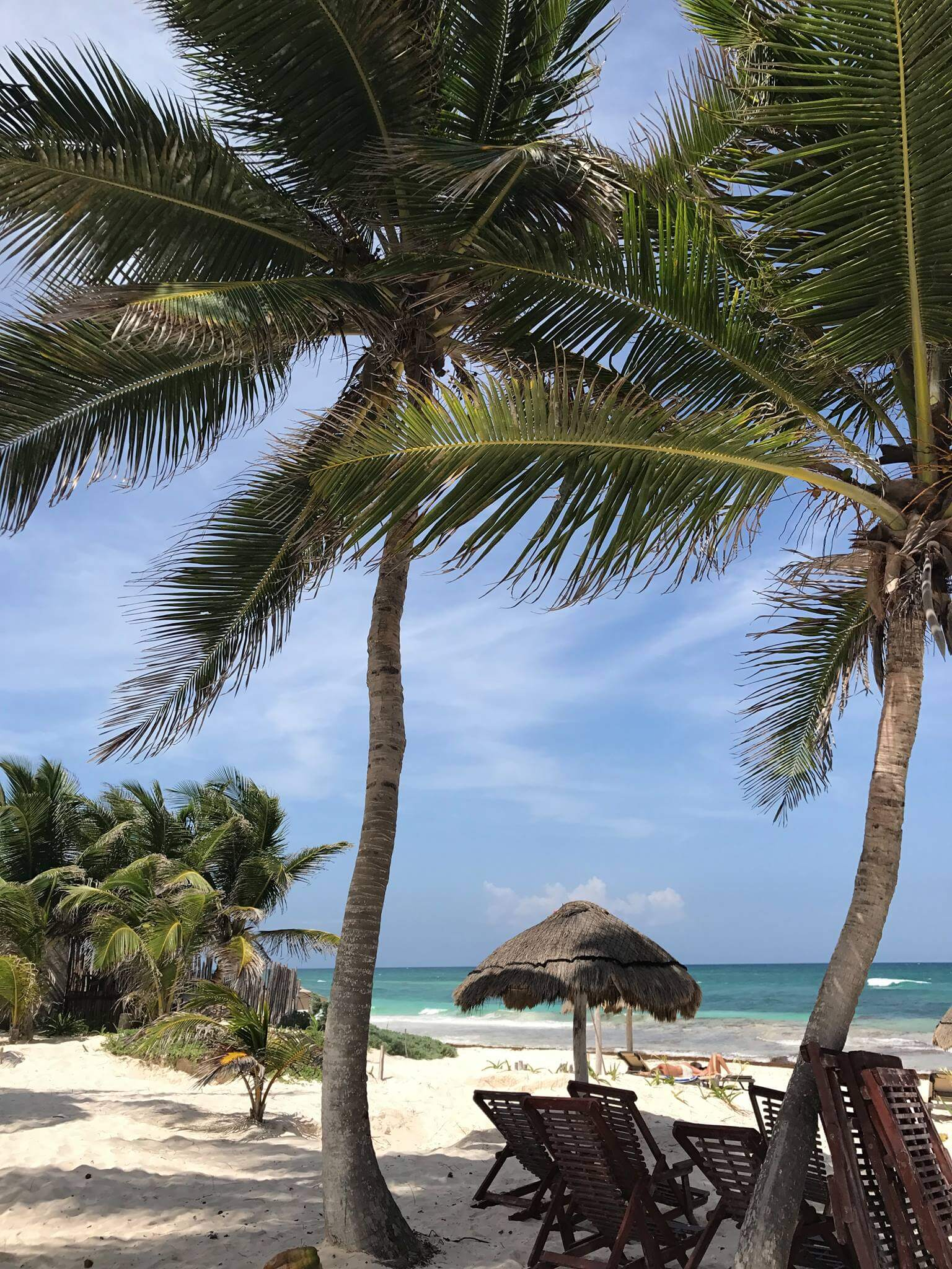 a sandy beach with palm trees swaying
