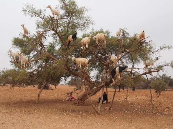 Suitcase Six Kate-Goats-Trees-Morocco Woman of the Week: Kate