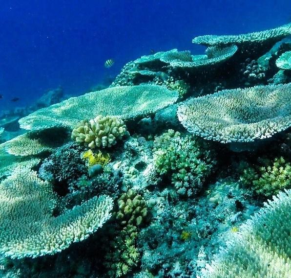 Suitcase Six apo-island-snorkeling2-2 8 Environmentally Friendly Adventures to Discover Around the World