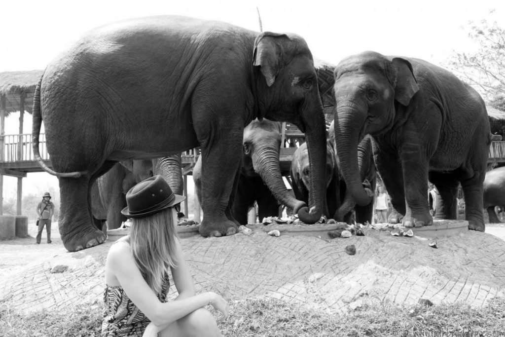 Suitcase Six Elephant-Nature-Park-1024x683 Ethical Travel Mistakes: 5 Things We Wouldn't Do Again and Their Responsible Alternatives