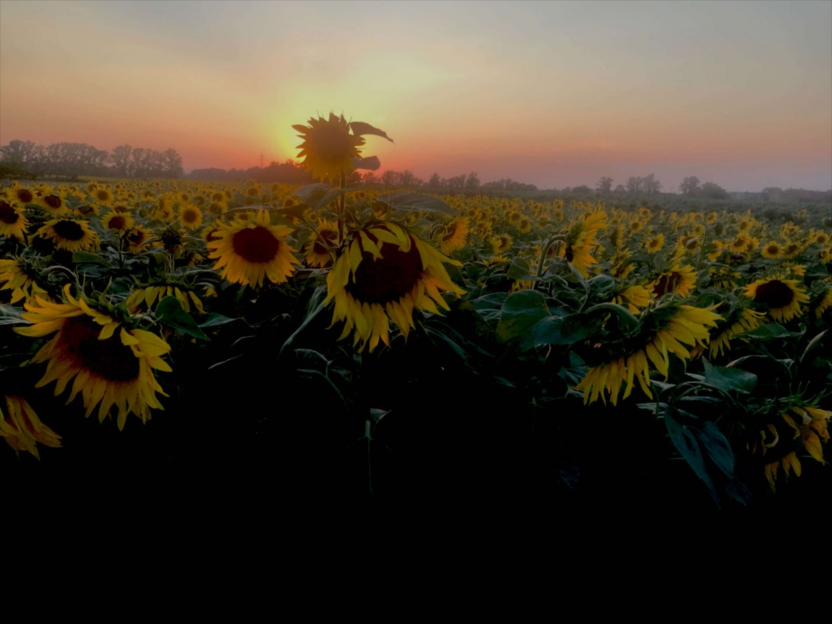 Suitcase Six Sunflowers Slow Travel: What it Is and Why You Should Try It