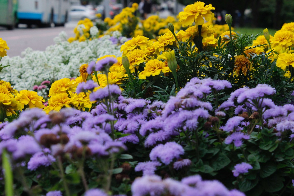 Suitcase Six flowers2 Slow Travel: What it Is and Why You Should Try It