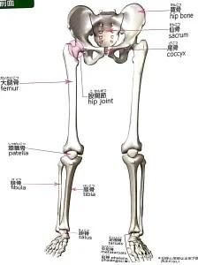 骨格 画像