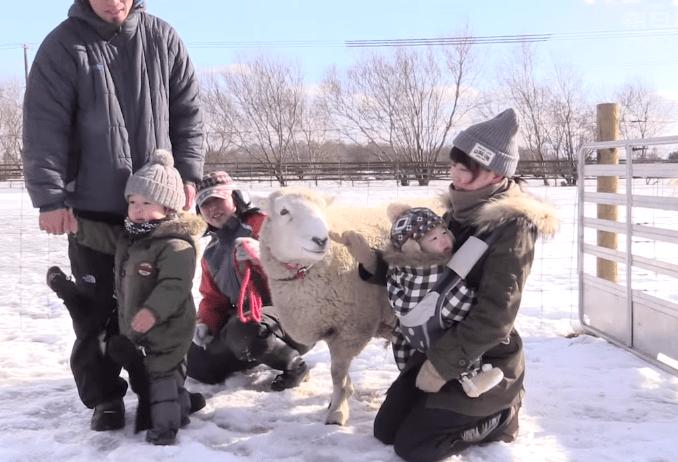 Happy, si Domba Tersenyum Dari Jepang 4