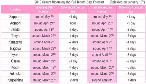 Perkiraan Musim Bunga Sakura Tahun 2019 di Jepang