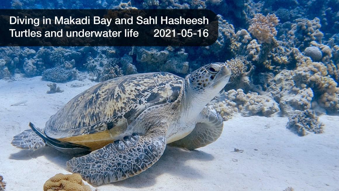 🇪🇬 Египет: 🤿 Дайвинг в Красном море – Макади Бэй, Сахл Хашиш (2021-05-16)