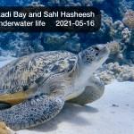 🇪🇬 Египет: 🤿 Дайвинг в Красном море - Макади Бэй, Сахл Хашиш (2021-05-16)
