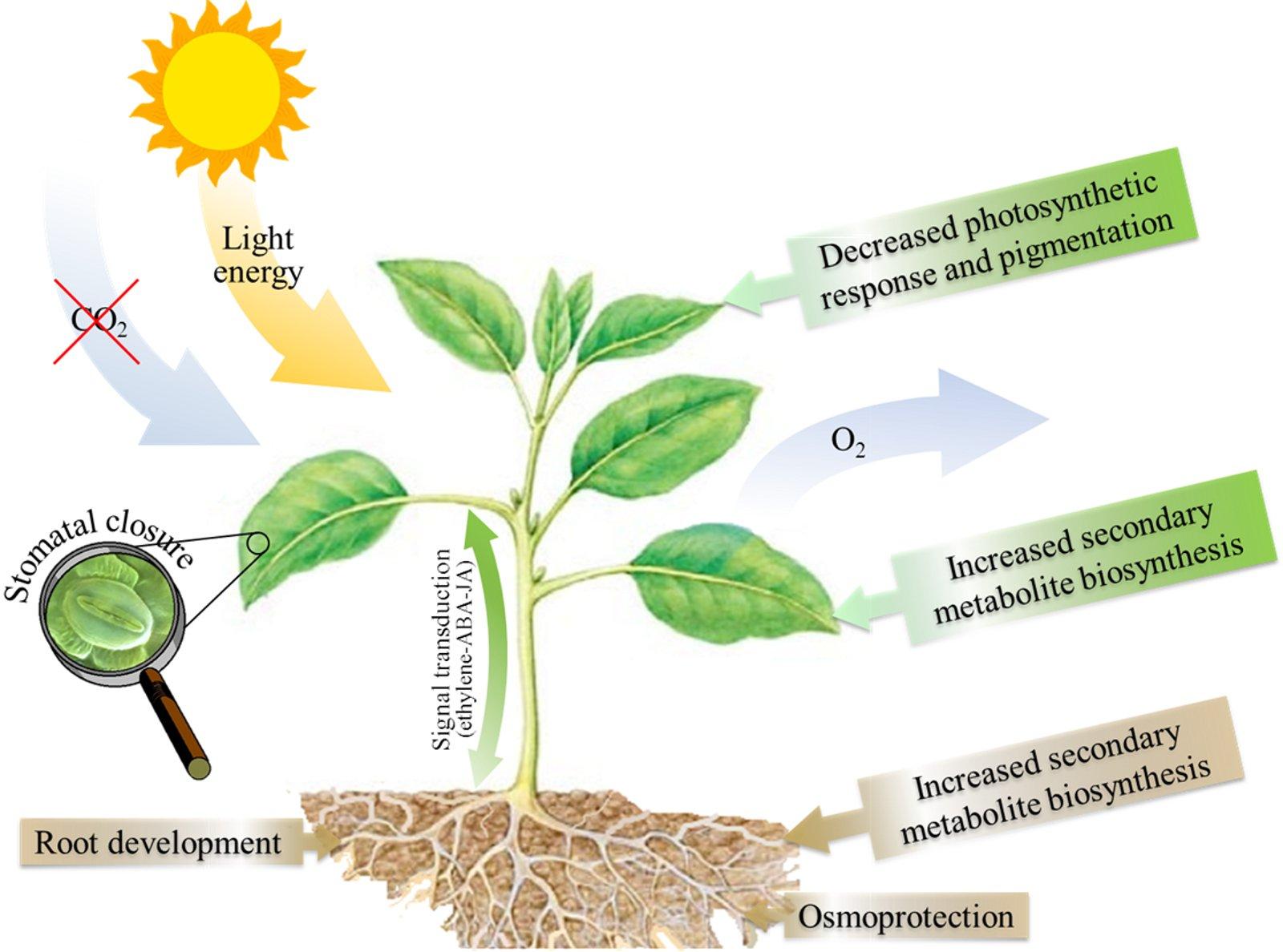 Fig Sukh Bio India