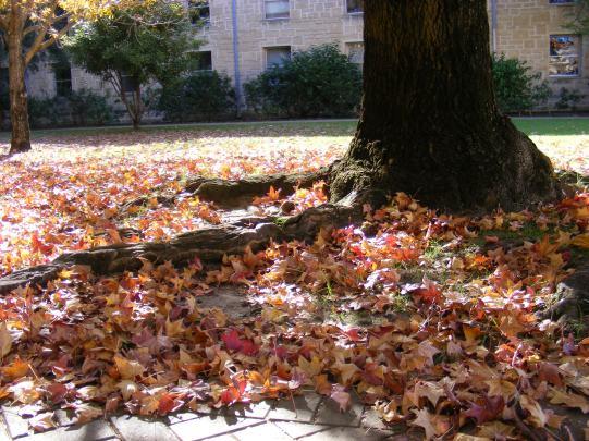 leaf and shadow I