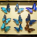 昆虫採集・飼育 昆虫を捕まえ、標本にして保管して楽しむ