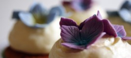 Cupcakes - Citroner pyntet med Hortensia´er