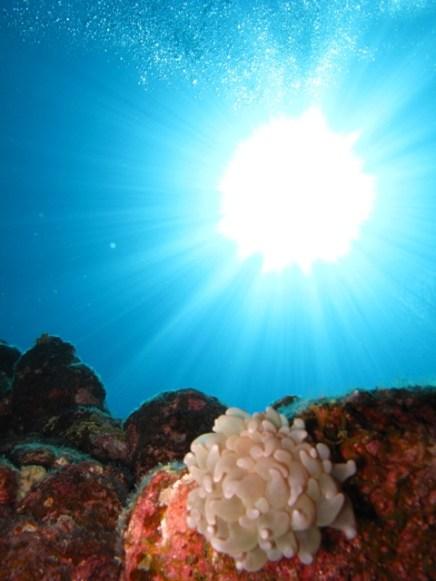 Explore Underwater Anambas