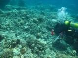 Lets Dive