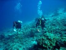 Coral Reef Monitoring
