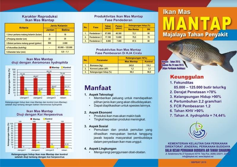 Ikan Mas Mantap